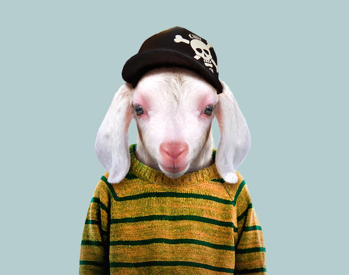 Super Cute Animals Dressed As Humans Portraits By Yago Partal