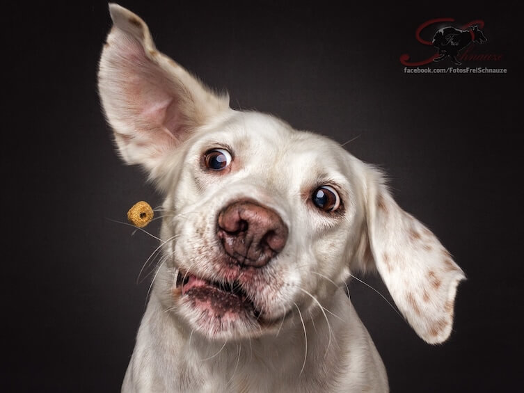 dog catching treats photos 14 (1)