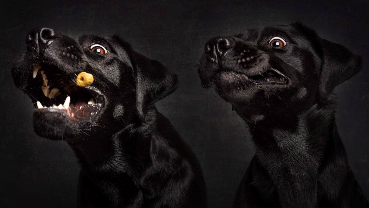 dog catching treats photos 16 (1)