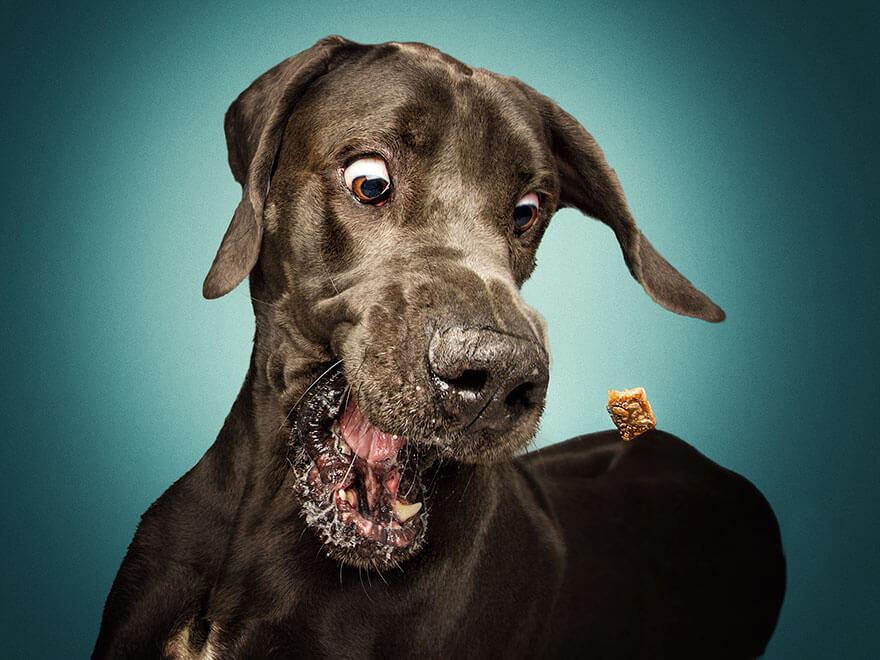 dog catching treats photos 18 (1)