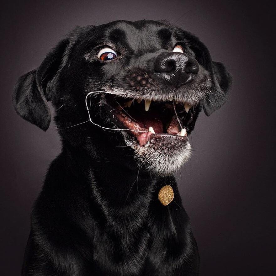 dog catching treats photos 2 (1)