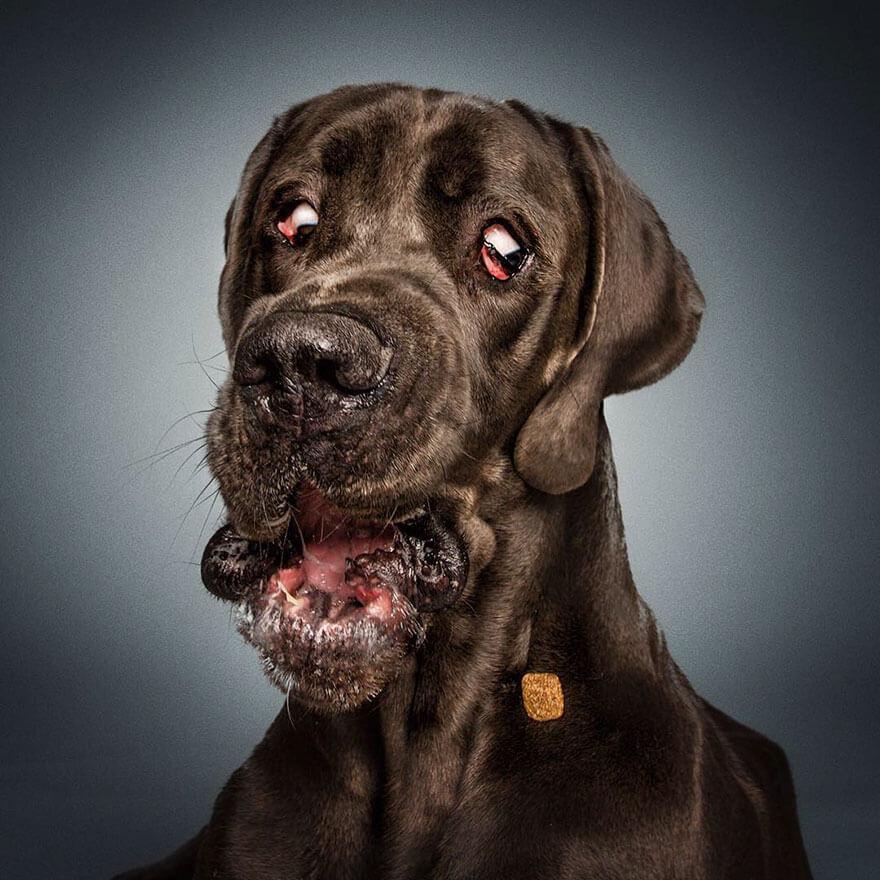 dog catching treats photos 5 (1)