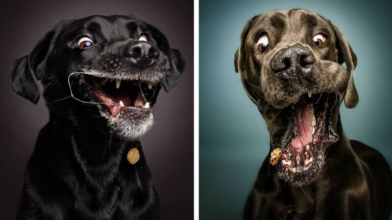 Dogs Trying To Catch Treats Mid-Air Make For Hilarious Photos