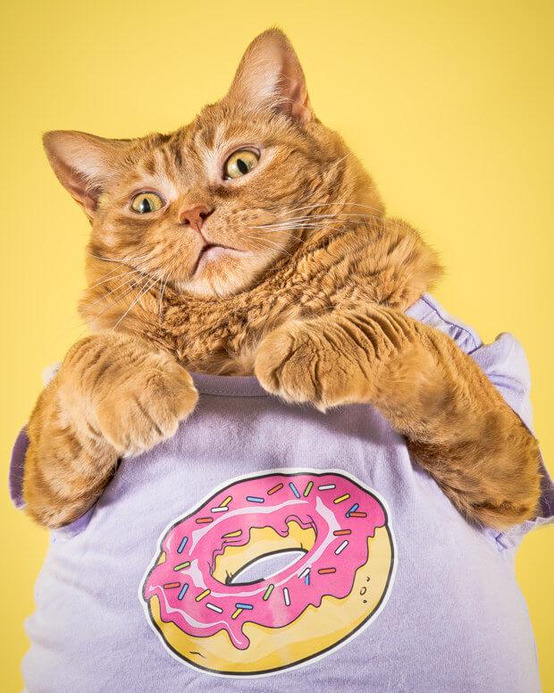 fat cat pictures (1)