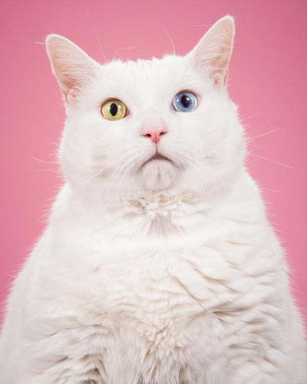 fat cat pictures 10 (1)
