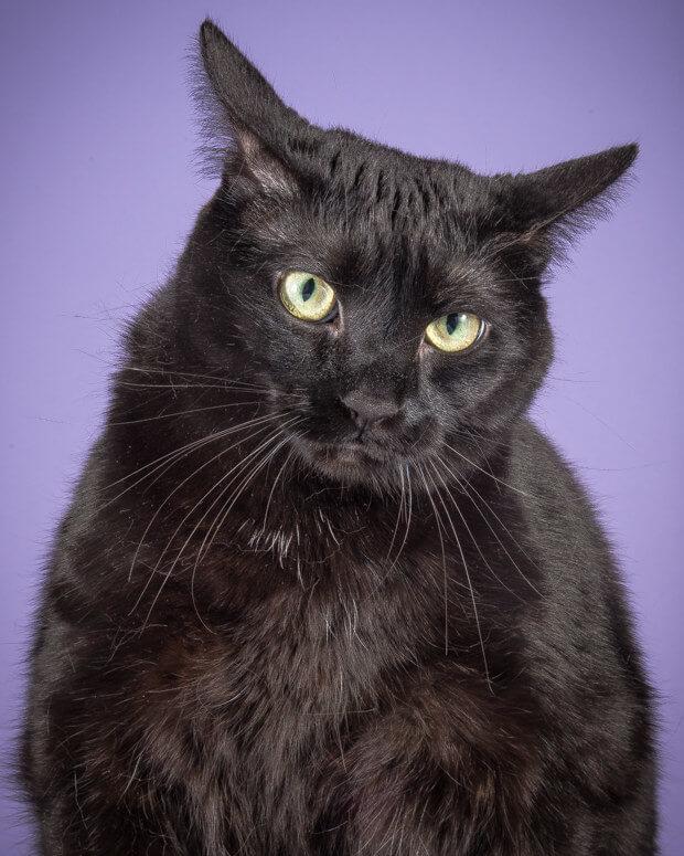 fat cat pictures 18 (1)