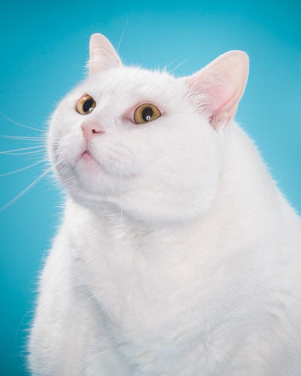 fat cat pictures 3 (1)
