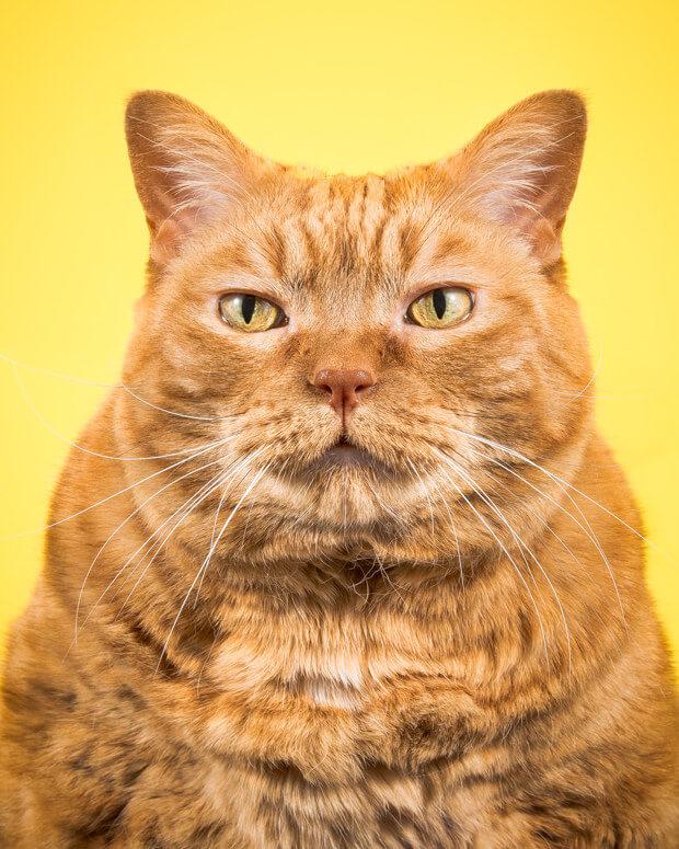 fat cat pictures 4 (1)