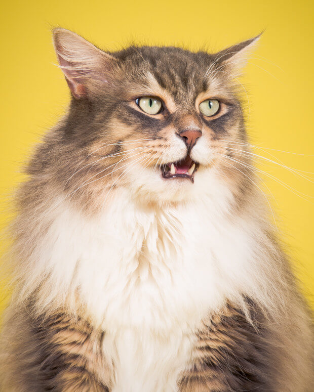 fat cat pictures 5 (1)