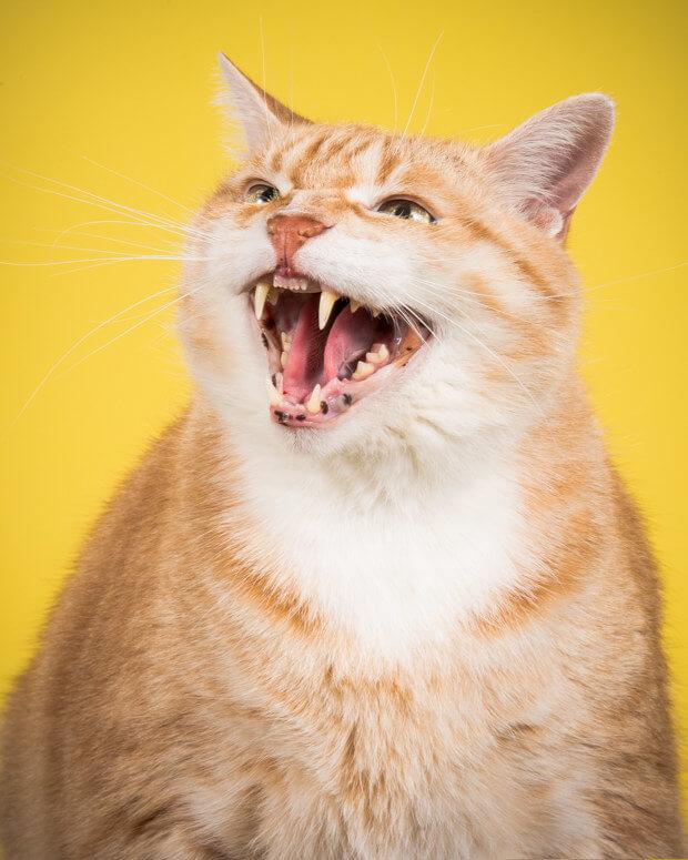 fat cat pictures 7 (1)