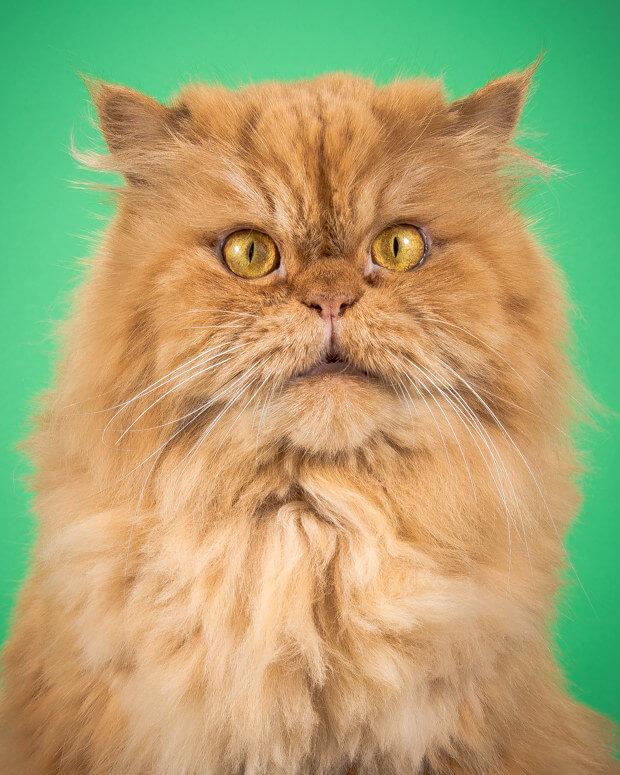 fat cat pictures 9 (1)