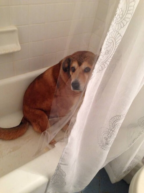 guilty dog face 19 (1)