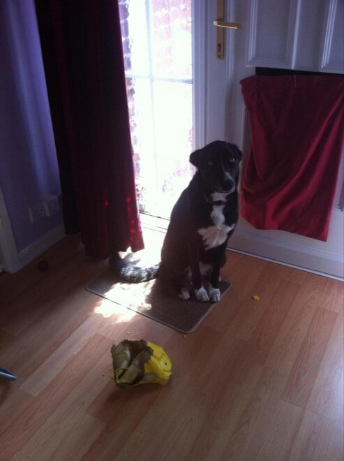 29 Adorable Guilty Dogs Who Always Get Away With Everything