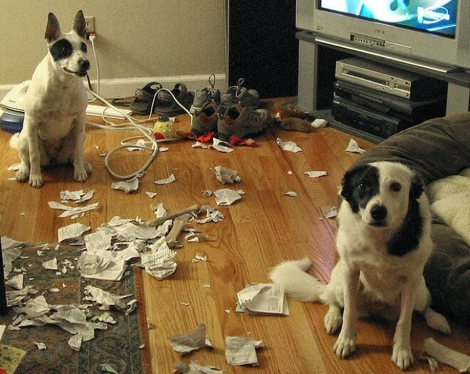 guilty dogs 3 (1)