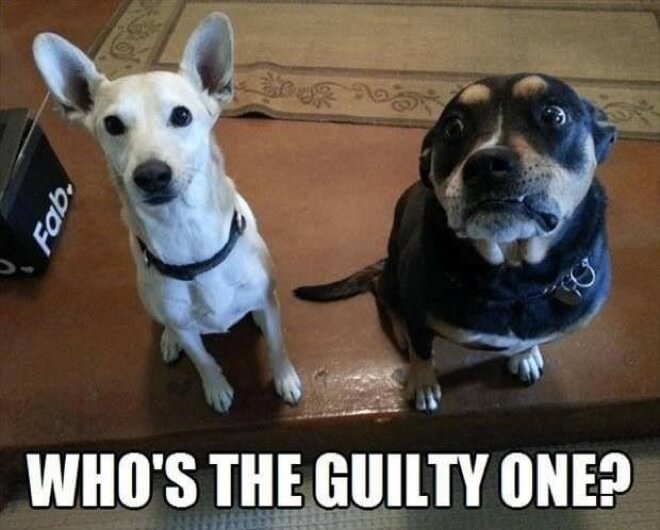 guilty dogs 7 (1)