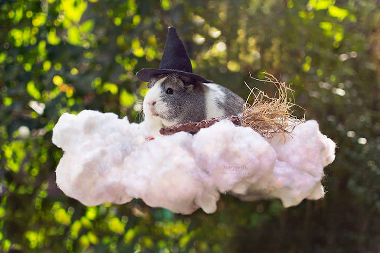 magical guinea pig pictures that are adorable and gothic at the same time