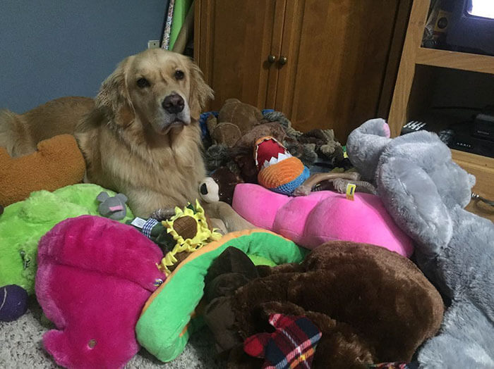 Therapy Dog brings different toy to bed each day (1)