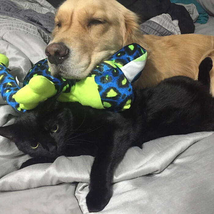 Therapy Dog brings different toy to bed each day 8 (1)