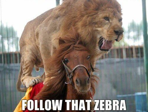 epic pictures - lion riding a horse chasing a zebra
