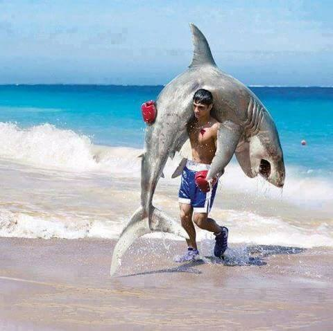 awesome photographs - man carrying a shark
