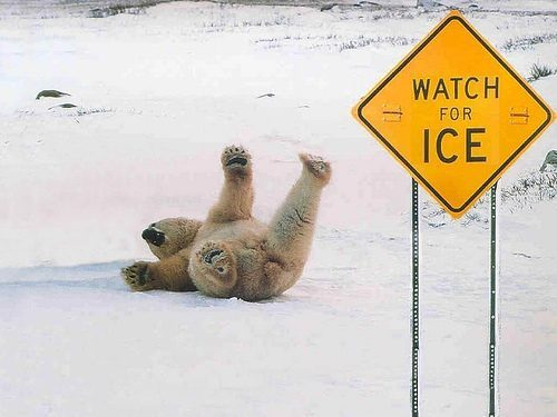 awesome photos - bear sliding on ice