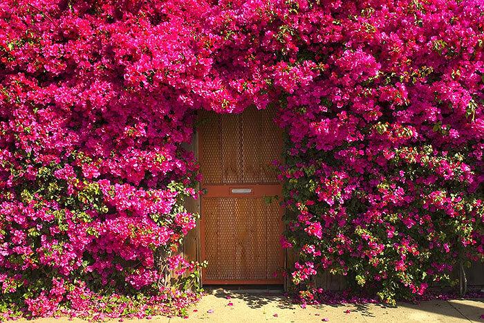 nice doors 15 (1)