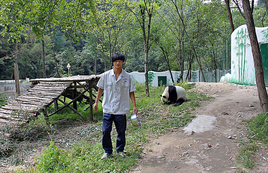 brown panda 9 (1)