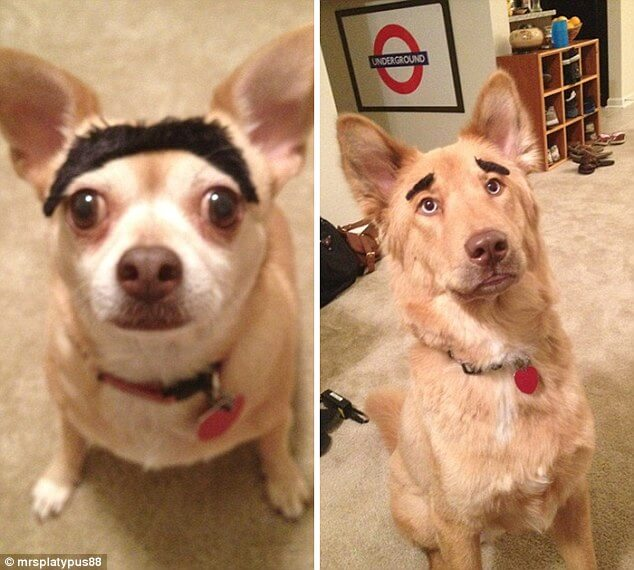 pets with eyebrows 10 (1)