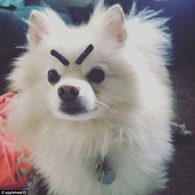pets with eyebrows 11 (1)