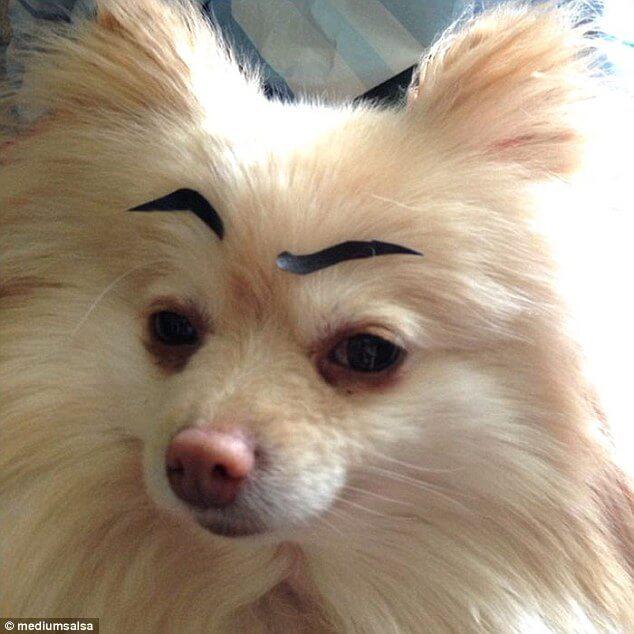 My Dogs Eye Won