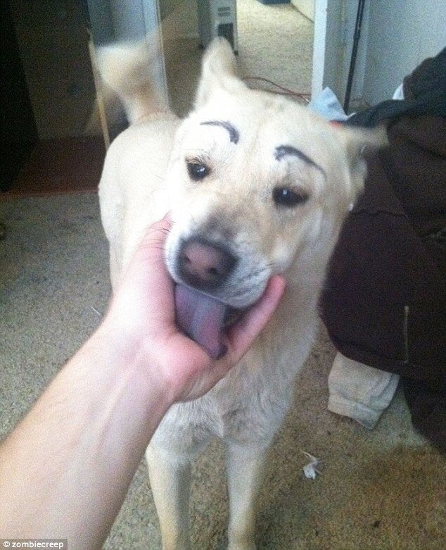20 Hilarious Photos Of Dogs With Eyebrows That Will Make