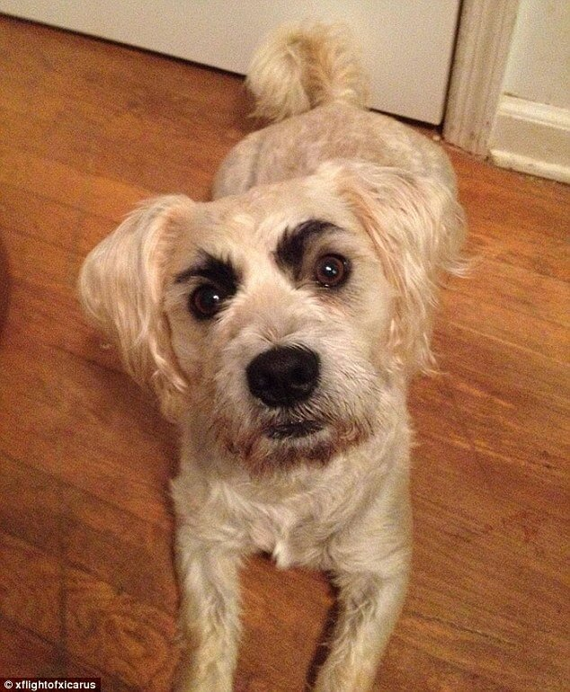 dogs with eyebrows 2 (1)