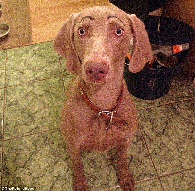 dogs with eyebrows 3 (1)
