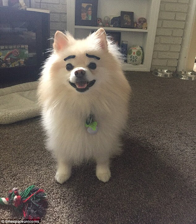 dogs with eyebrows 4 (1)