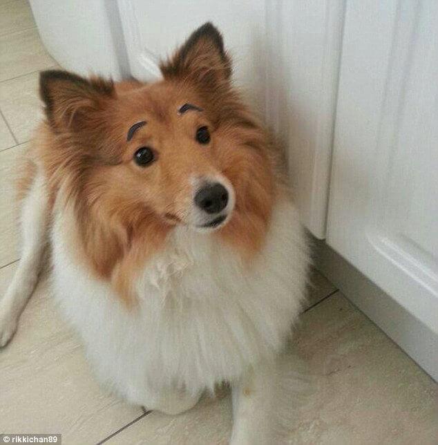 How Would My Dog Look Like Human