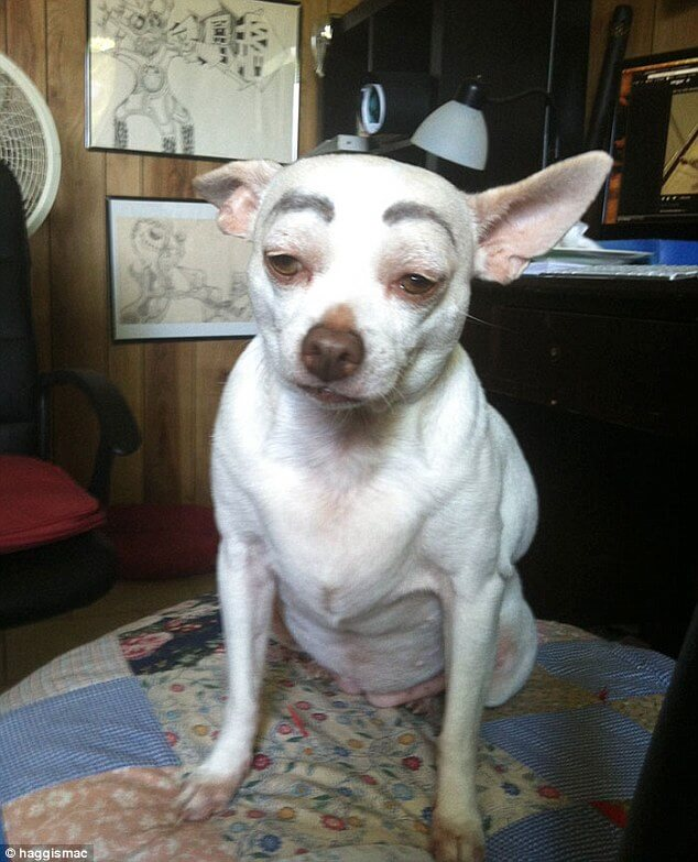 dogs with eyebrows 6 (1)