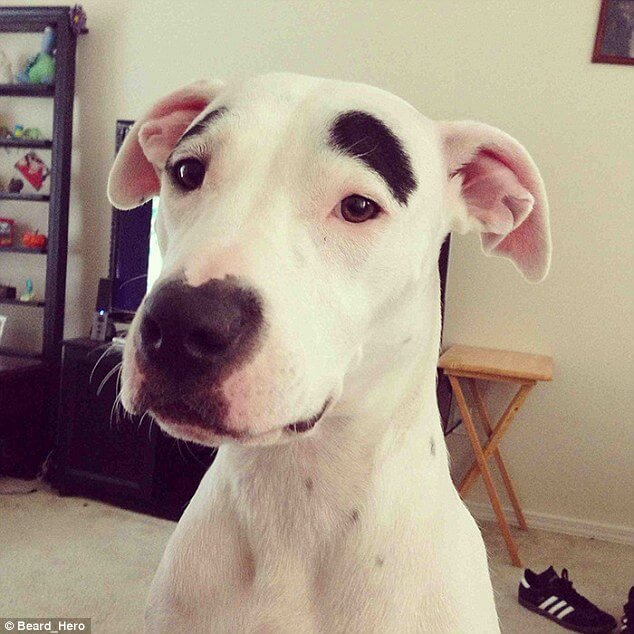 dogs with eyebrows 7 (1)