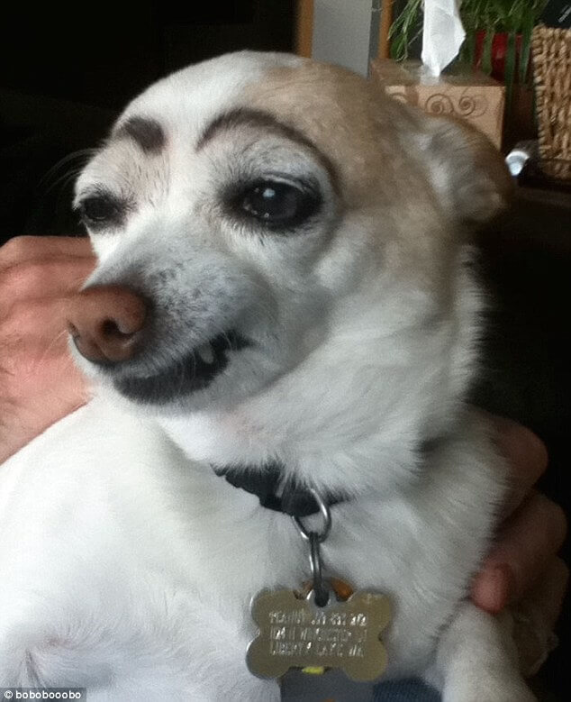 pets with eyebrows 8 (1)