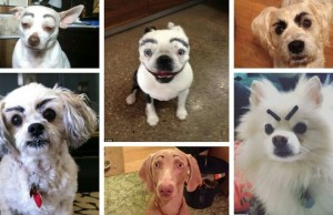 dogs with eyebrows feat (1)