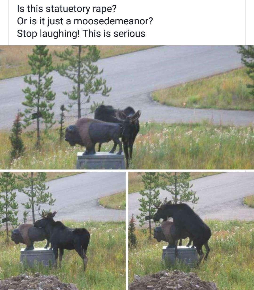 hilarious puns 6 (1)