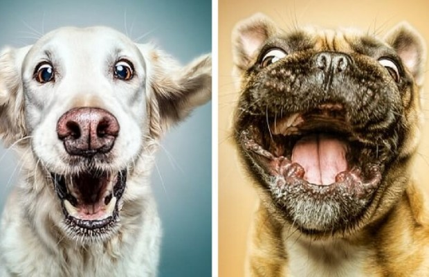 Manuela Kulpa Created These Happy Dogs Pictures That Will ... - photo#2