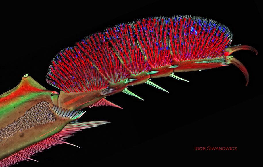 insect photography igor siwanowicz 5 (1)