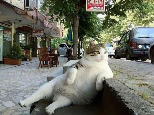 laid back cat (1)
