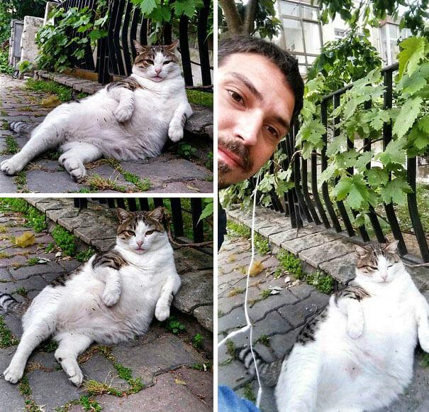laid back cat 6 (1)