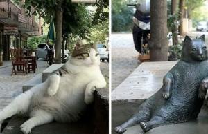 laid back cat feat (1)