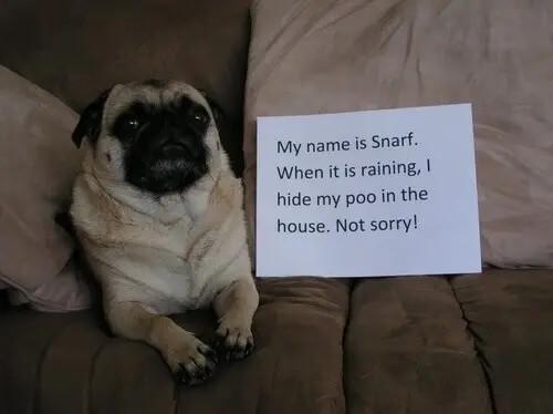 pug-shaming-17 (1)