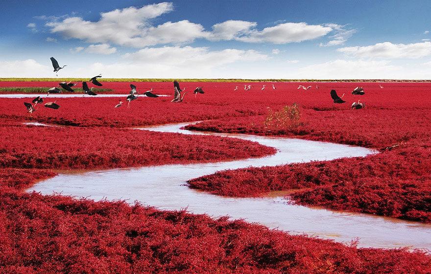 red beach china (1)