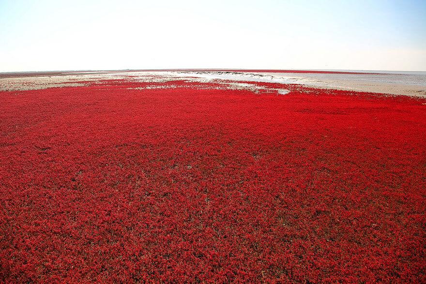 red beach china 10 (1)