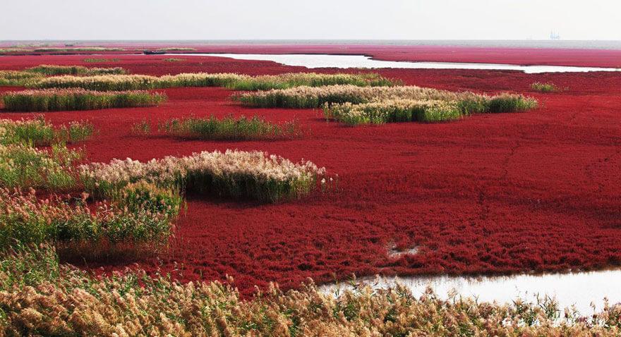 red beach china 2 (1)