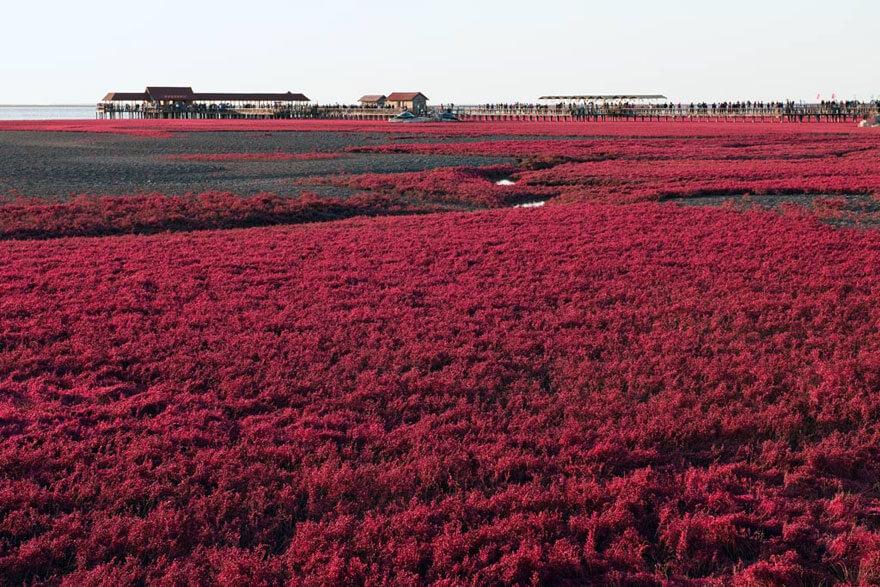 red beach china 6 (1)